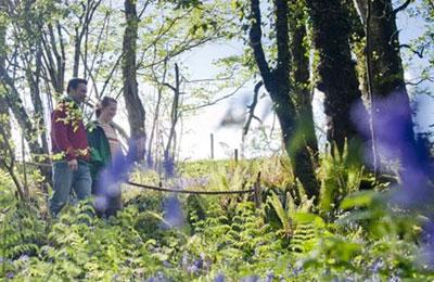 Marlbank Scenic Loop : Cladagh Glen